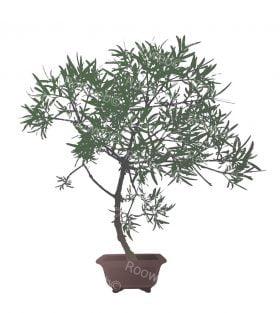 Bonsai Tree and pot