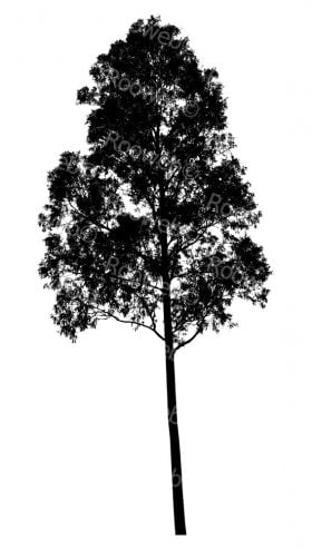 australian eucalyptus tree silhouette