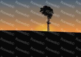 Gum Tree Sunset