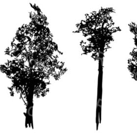 Vector Silhouette Trees