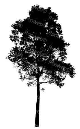 Eucalyptus Tree Silhouette NSW