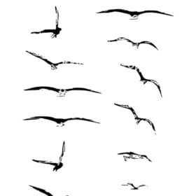 Bird sketch vectors birds flying