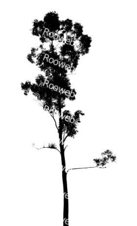 Slim gum tree silhouette